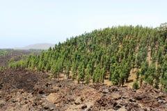 Kanarische Insel Stockfoto