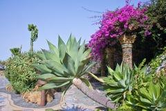 kanarowy glorieta wysp losu angeles palma plac Obraz Royalty Free