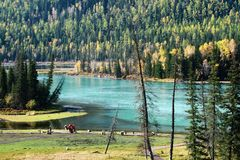 Kanas Bay. Kanas is Mongolian for The Lake in the Canyon. Here, in this picture, is the river leaving the Kanas lake. The winding river passes through some Royalty Free Stock Photography