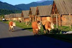 Kanas Burqin Hemu. Eastphoto, tukuchina,  Kanas Burqin Hemu Stock Photography