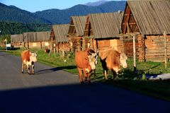 Kanas Burqin Hemu Stock Photography
