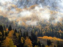 Kanas Forest in Autumn. `Kanas` is a Mongolian word meaning `lake in the canyon`. The main features of this Park are the `high mountain glacier lake` Kanas Lake Stock Photography