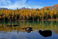 Kanas Lake Royalty Free Stock Image