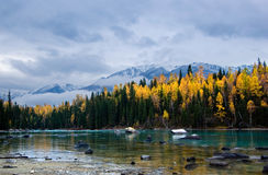 Kanas lake. The view of kanas river in autumn,with snow mountain in background Royalty Free Stock Images