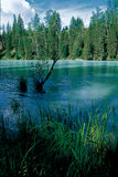 Kanas Lake. 's clear water of the many beautiful woods weather Stock Photography