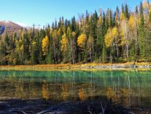 Kanas Lake in Autumn Stock Image