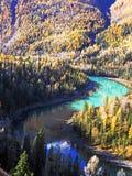 Moon Bay of Kanas Lake in Autumn Stock Photography