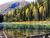 Kanas Lake in Autumn. `Kanas` is a Mongolian word meaning `lake in the canyon`. The main features of this Park are the `high mountain glacier lake` Kanas Lake Stock Image