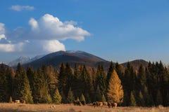 Kanas pastoraal landschap royalty-vrije stock afbeeldingen