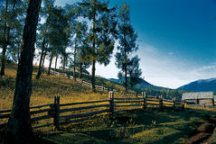 Kanas ranch. In the morning of quiet comfort Royalty Free Stock Image