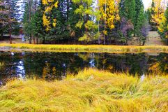 Kanas scenery,The Colour of Autumn Stock Photography