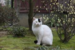 Kanazawa-Katze Lizenzfreie Stockfotos