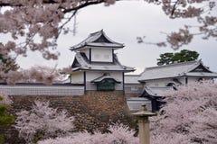 Kanazawa slott till och med Cherry Blossoms - Kanazawa, Japan Arkivfoton