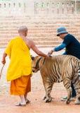 Kanchanaburi, Tailândia - 23 de maio de 2014: Monge e voluntários de Buddist com o tigre de Bengal em Tiger Temple o 23 de maio d Fotografia de Stock Royalty Free