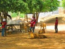 KANCHANABURI, THAÏLANDE - 25 avril 2017 avec une limite de tigre Photos libres de droits