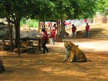 KANCHANABURI, THAILAND - April 25, het vertrouwelijke ogenblik van 2017 met een tijger Stock Fotografie