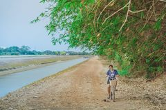 KANCHANABURI THAILAND - APRIL 4 : Unidentified young woman riding a bicycle on gravel road along the irrigation canal at  Mae stock images