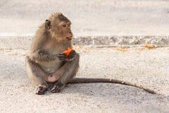 Kanchanaburi, Thailand: Monkey Eating Papaya Stock Photo
