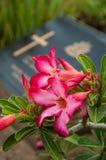 Flowers on war cemetery Stock Photos