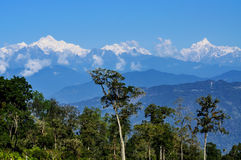 Kanchenjugha Mountain Range with trees. In the foreground Stock Images