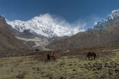 Kanchenjunga Royalty Free Stock Photo