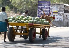 Kanchipuram, Tamil Nadu, Ινδία, στις 19 Μαρτίου 2015: Τα μη αναγνωρισμένα άτομα φέρνουν τη συγκομιδή του καρπουζιού στο ξύλινο κά Στοκ Εικόνες
