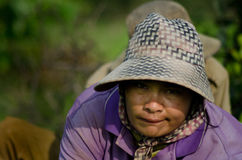 KANDAL-PROVINCIE, KAMBODJA - DECEMBER 31, 2013 - het Vrouwelijke Rijstwerk Stock Afbeelding