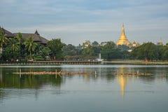 从kandawgyi湖,仰光,缅甸的Shwedagon塔 库存照片