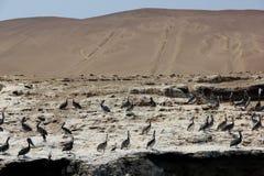 Kandelabers van Paracas stock fotografie