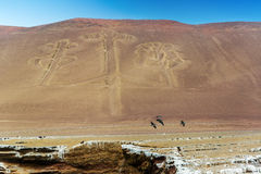 Kandelabry Paracas, Peru Zdjęcie Royalty Free