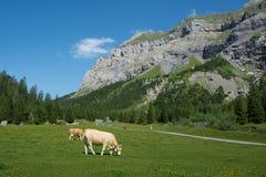 Kandersteg, Швейцария Стоковая Фотография RF