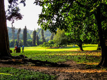 Kandy Botanical Garden Royalty Free Stock Photography