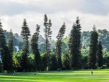 Kandy Botanical Garden Stock Photo