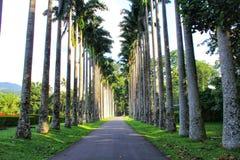 Kandy Botanische Tuin in Sri Lanka stock foto's