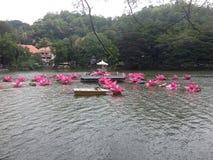kandy lake in sri lanka stock photography