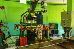 Unknown female worker at Kadugannawa Tea Factory operates raw tea humidifying machine royalty free stock photo