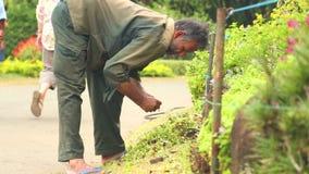 KANDY, SRI LANKA - FEBBRAIO 2014: Il punto di vista di un lavoratore che lavora con il suolo ed i fiori nei giardini botanici a K archivi video