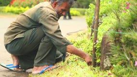 KANDY, SRI LANKA - FEBBRAIO 2014: Il punto di vista di un lavoratore che lavora con il suolo ed i fiori nei giardini botanici a K video d archivio