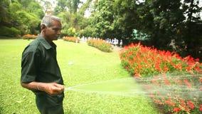 KANDY, SRI LANKA - FEBBRAIO 2014: Inseguimento del colpo dei fiori d'innaffiatura di un lavoratore nei giardini botanici a Kandy  video d archivio
