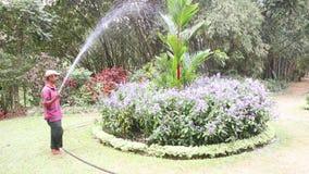 KANDY, SRI LANKA - FEBBRAIO 2014: La vista dei fiori d'innaffiatura di un lavoratore nei giardini botanici a Kandy Kandy è una ci stock footage