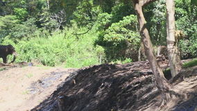 KANDY, SRI LANKA - FEBRUAR 2014: Elefant in den natürlichen Umgebungen nahe dem Tempel des Zahnes in Kandy Kandy ist eine bedeute stock video