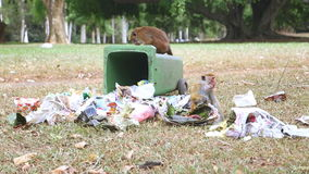 KANDY, SRI LANKA - FEBRUARY 2014: Two monkeys going through trash can in the botanical gardens in Kandy. Kandy is a major city in. Sri Lanka, second biggest stock video footage