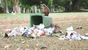 KANDY, SRI LANKA - FEBRUARY 2014: Two monkeys going through trash can in the botanical gardens in Kandy. Kandy is a major city in. Sri Lanka, second biggest stock footage