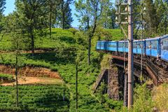 Passenger train passes through tea plantations on a sunny day royalty free stock image