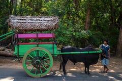 KANDY, SRI LANKA - NOVEMBER 2013: Coutryman mit Stierwagen Lizenzfreie Stockbilder