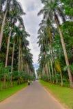 Kandy stad i Sri Lanka royaltyfri bild