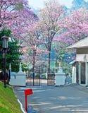 The Kandy street, Sri Lanka Royalty Free Stock Photography
