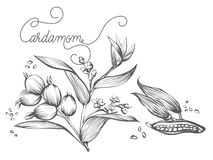 Kanelbrun filial, blad, blomma, skäll Fotografering för Bildbyråer