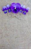 kanfas blommar purple Royaltyfri Fotografi