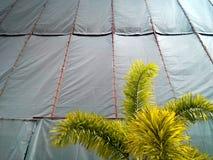 Kanfasvägg och träd Royaltyfria Bilder